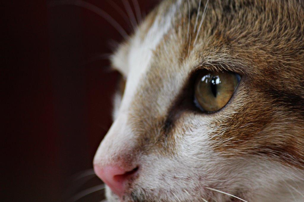 foto mata kucing